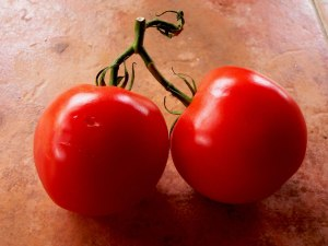 tomato nightshade