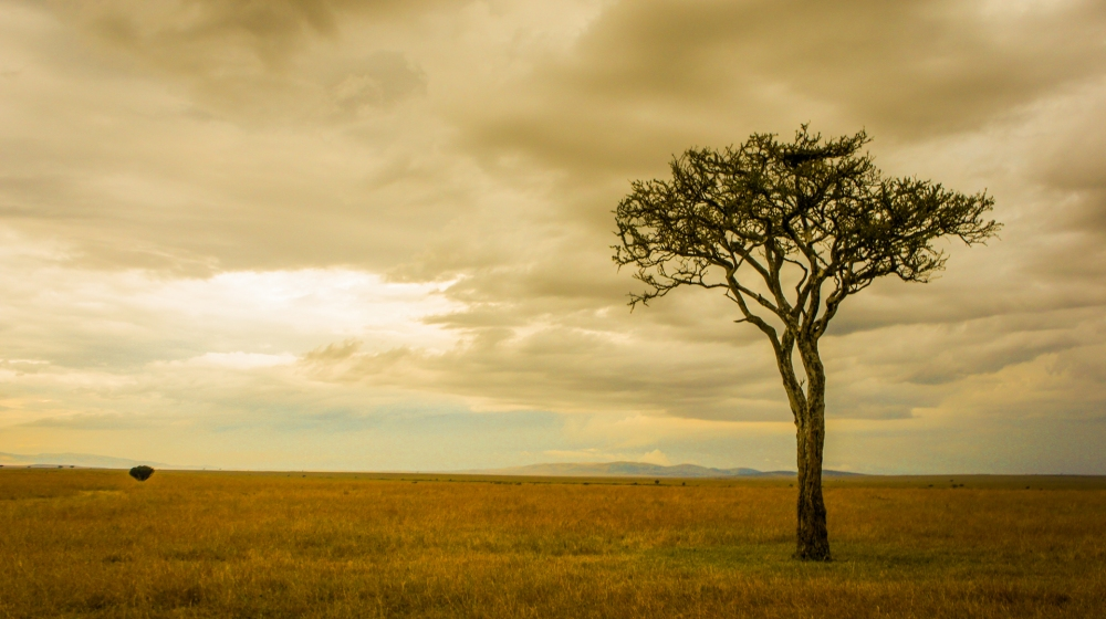 11-Ravi-Patel-The-Lone-Tree