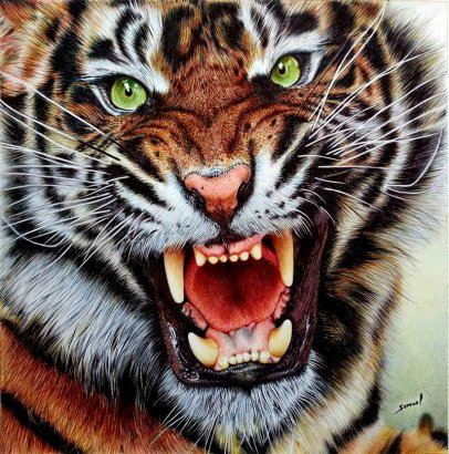 angry_tiger___ballpoint_pen_by_vianaarts-d68doqw